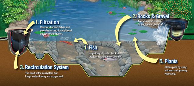 EcoSystem Pond Diagram