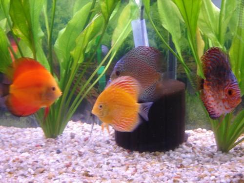 Freshwater Aquariums
