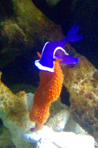A personal favorite! The nudibranch.
