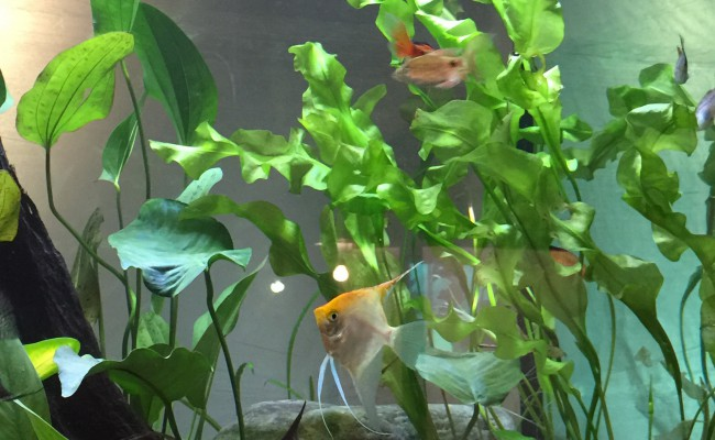 Live-Plant-pic2