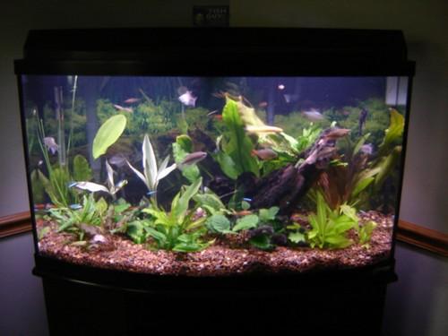 Live-Plant-pic23