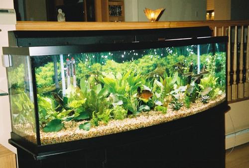 Live-Plant-pic26