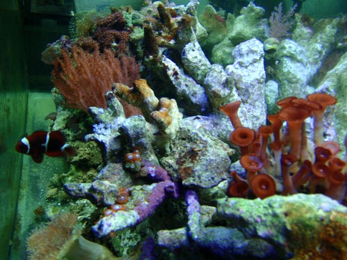 Reef-pic24