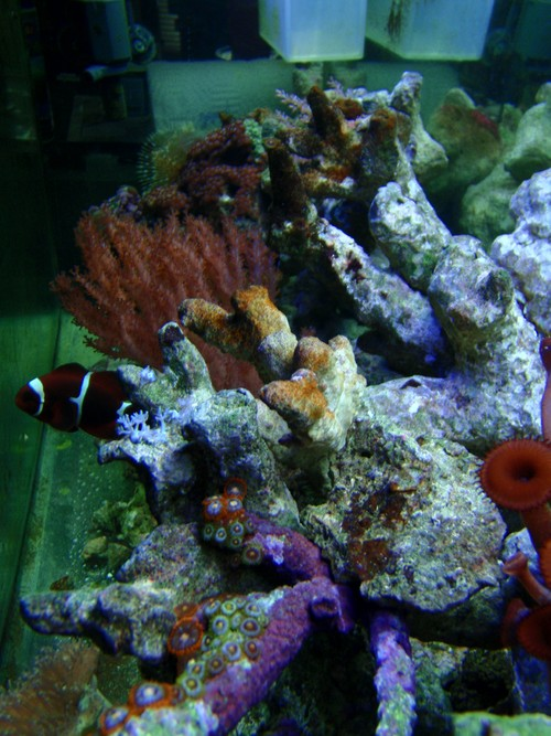Reef-pic26