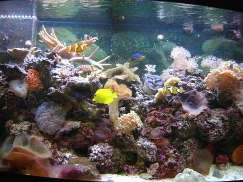 Reef-pic3