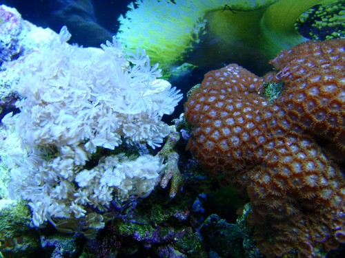 Reef-pic31