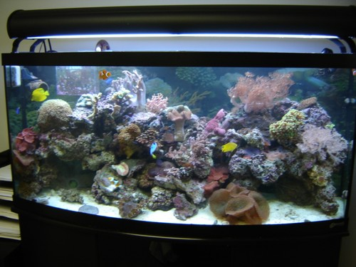 Reef-pic5