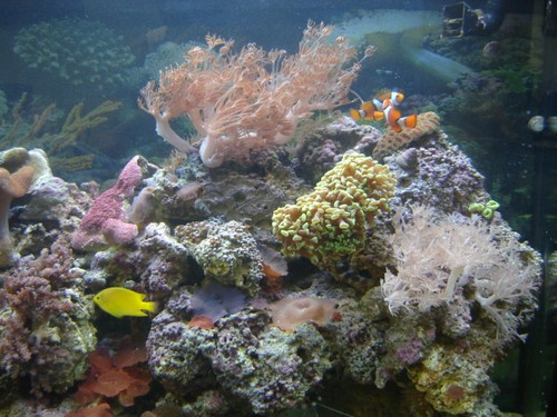 Reef-pic6
