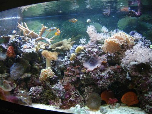 Reef-pic8
