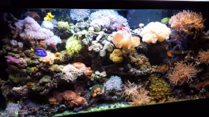 cover-reef-tank
