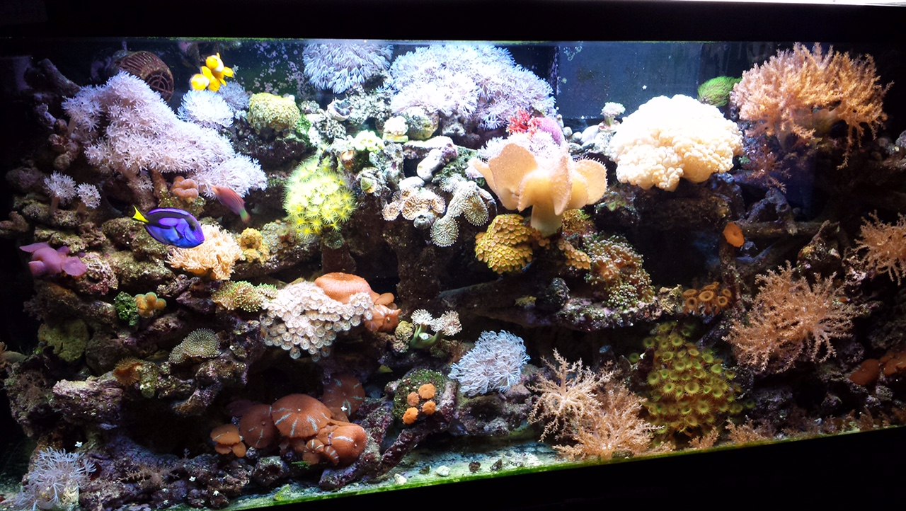 Corals for Reef Tanks | The Fish Guy | Pond Maintenance