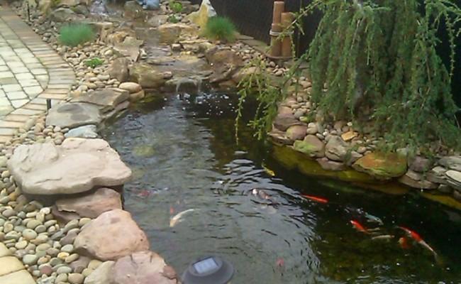 ponds-pic13