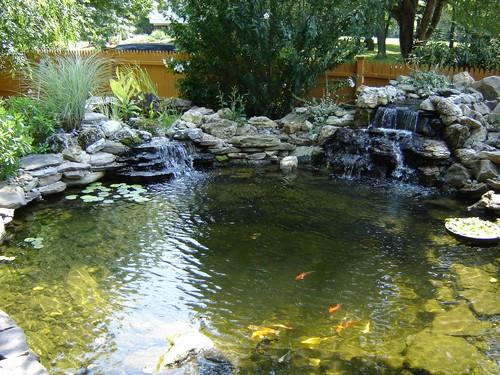 ponds-pic26