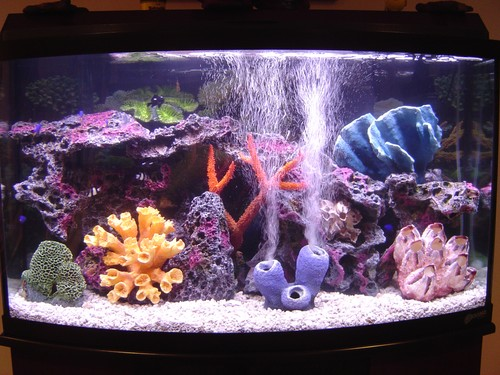 Saltwater aquariums the fish guy pond maintenance for Saltwater fish pond
