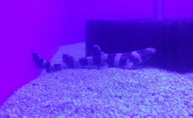 saltwater-pic3
