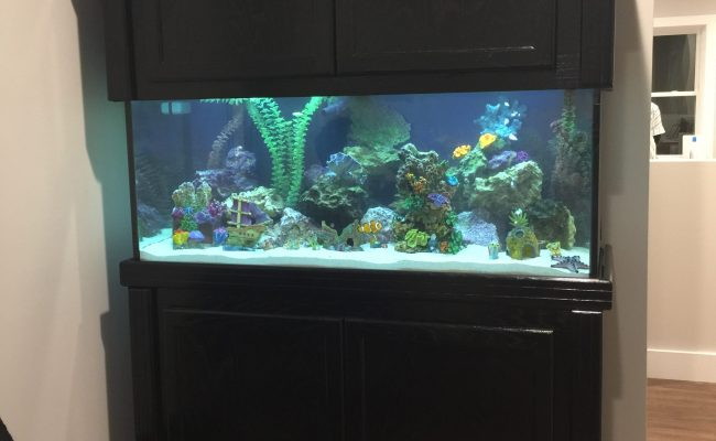75 Gallon Saltwater Fish Tank