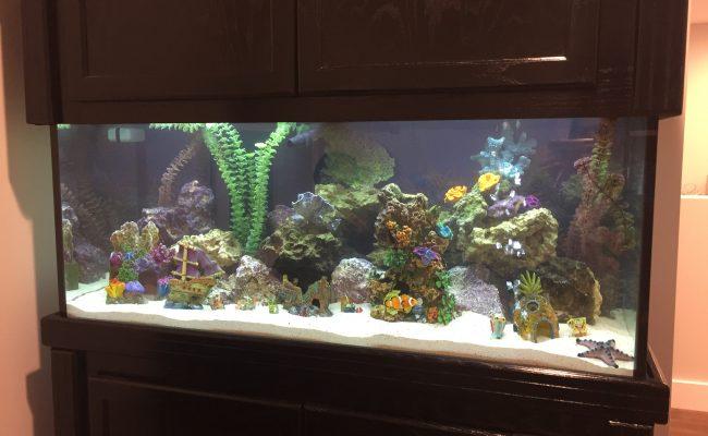 75 Saltwater Fish Tank