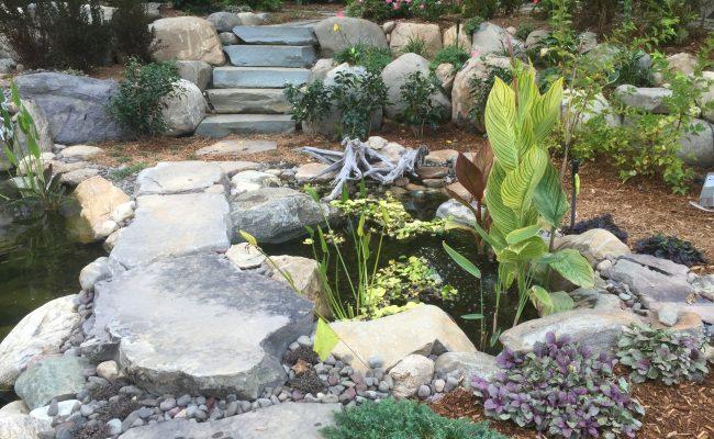 Intake Bog area – Natural Skimmer