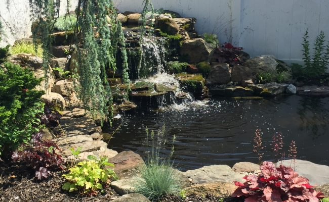Pond Re-build with Waterfall