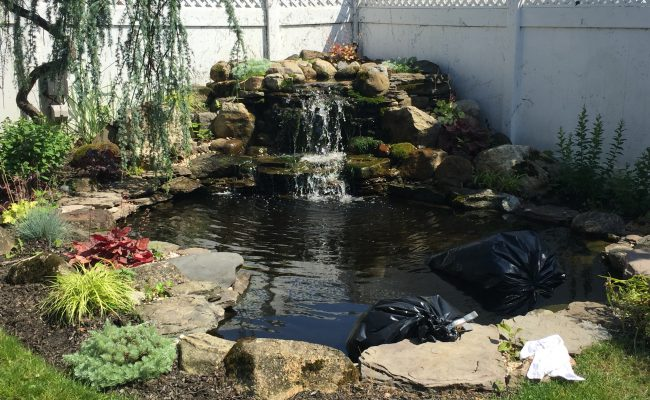 Backyard Pond Re-build – Large Koi Acclimation