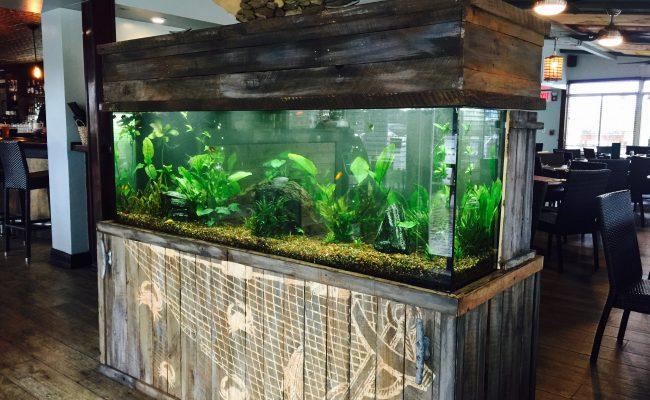 180 Gallon Freshwater Fish Tank