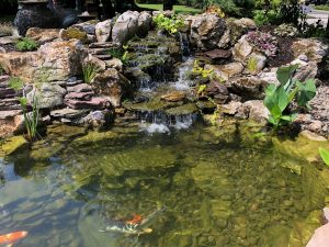 Ponds - Naturally Balanced Ecosystem Ponds | The Fish Guy ... on natural looking bird baths, natural looking fencing, natural looking pond liners, natural looking waterfalls, natural looking porches, natural looking retaining walls,