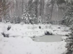 Snow Covered Pond - Lloyd Harbor, NY
